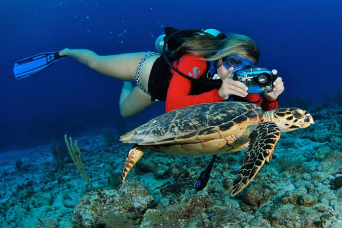 Diving with Cayman Aggressor IV Liveaboard