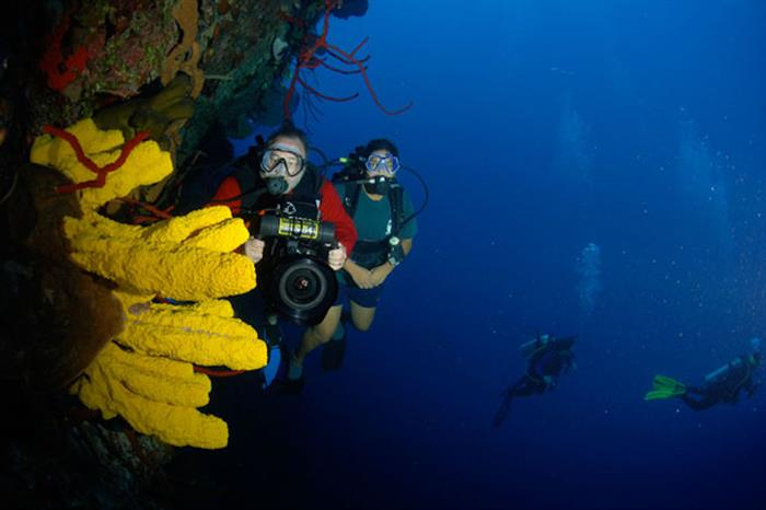 Diving the Cayman Walls