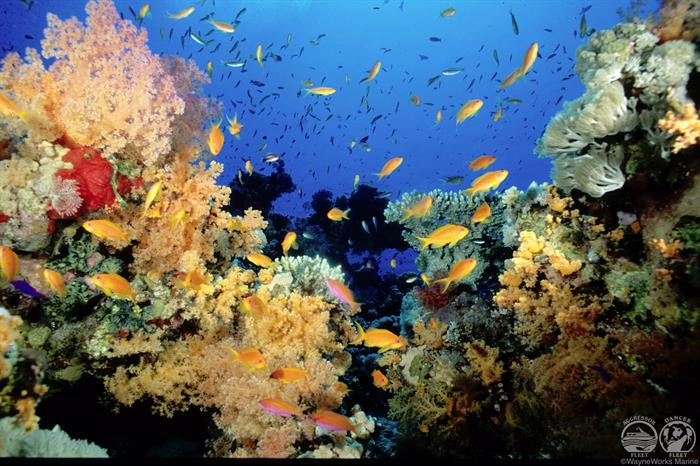 Colourful Reefs with Fiji Aggressor Liveaboard