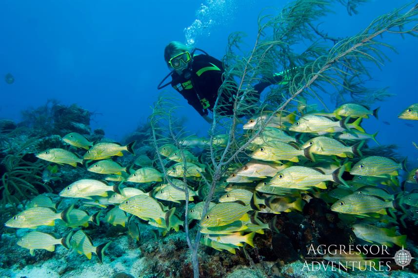 Marine Life - Turks and Caicos Aggressor II