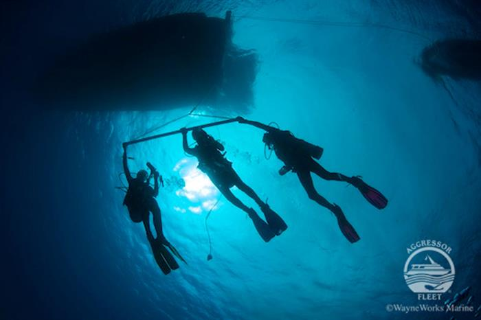#diving - Turks and Caicos Aggressor II