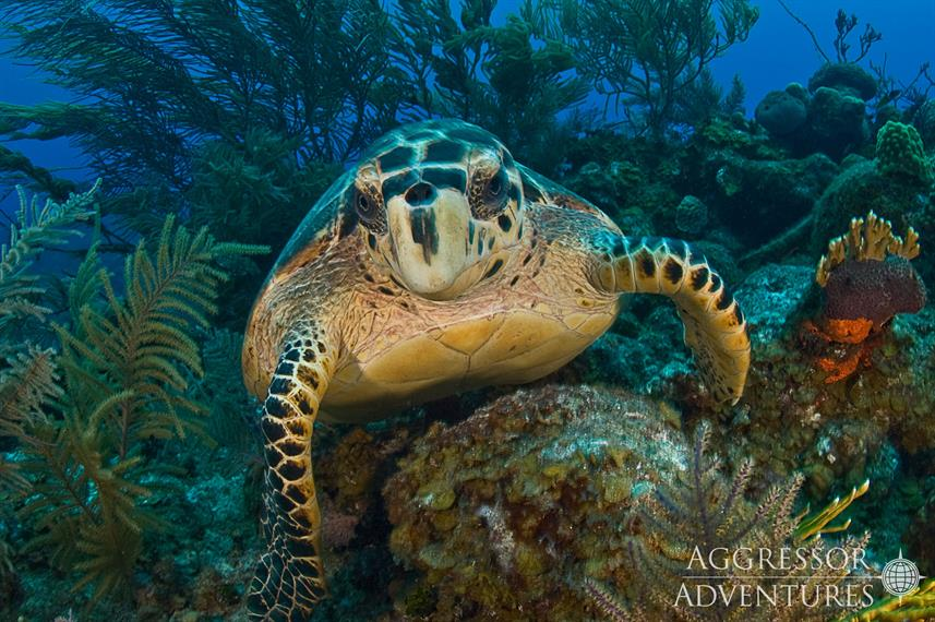 Turtle - Turks and Caicos Aggressor II