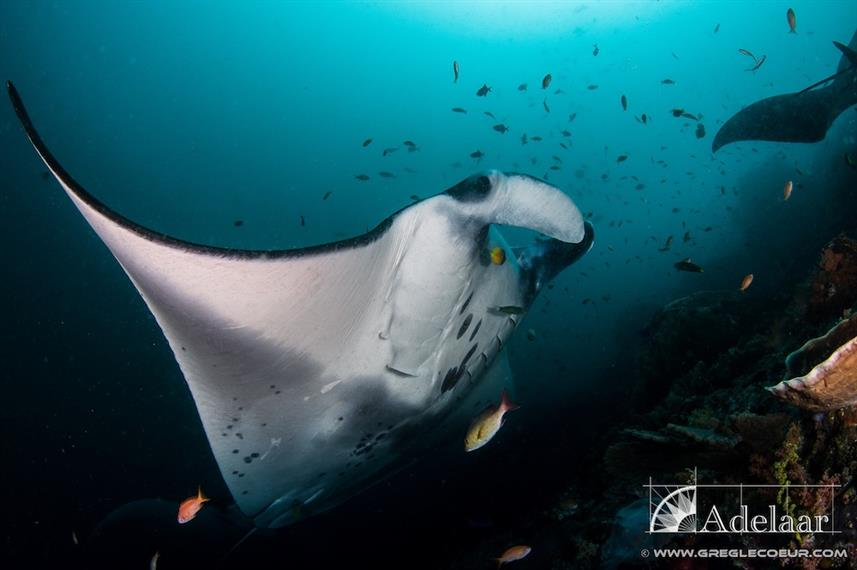 Manta Cleaning Station Indonesia