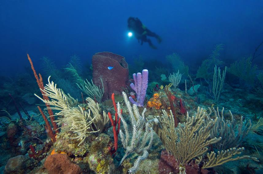 Coral Reef - Turks and Caicos Explorer