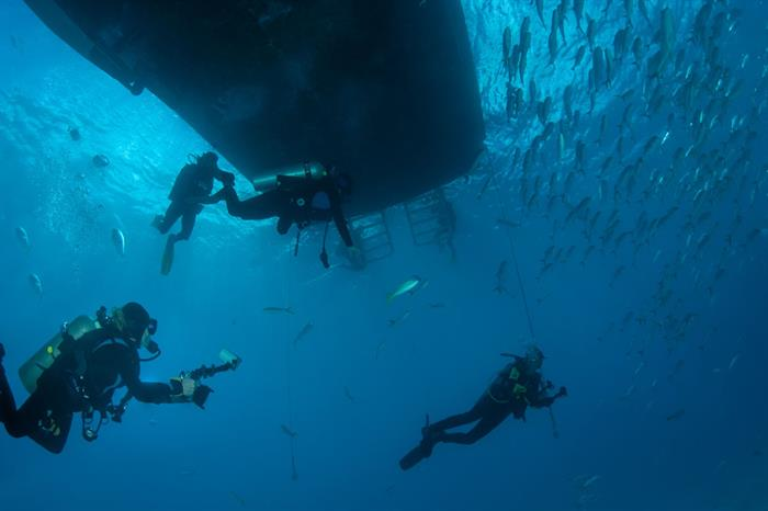 #diving - Turks and Caicos Explorer