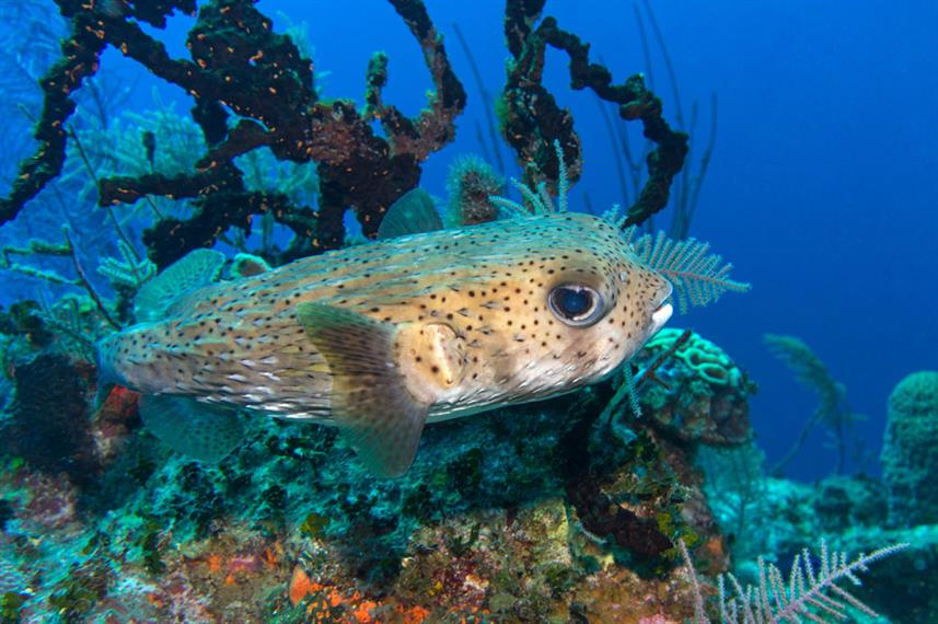 Marine Life - Turks and Caicos Explorer