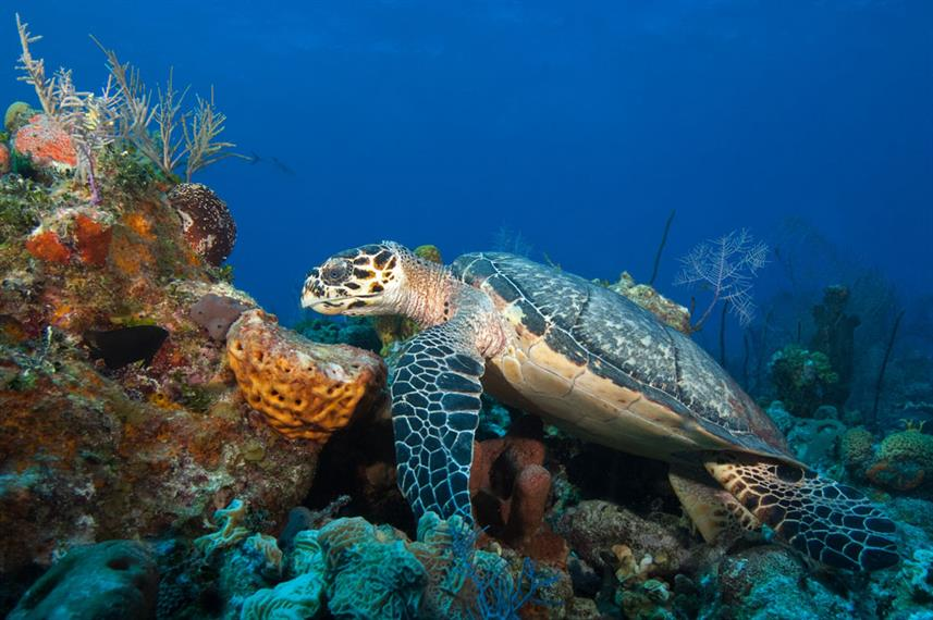 Turtle - Turks and Caicos Explorer