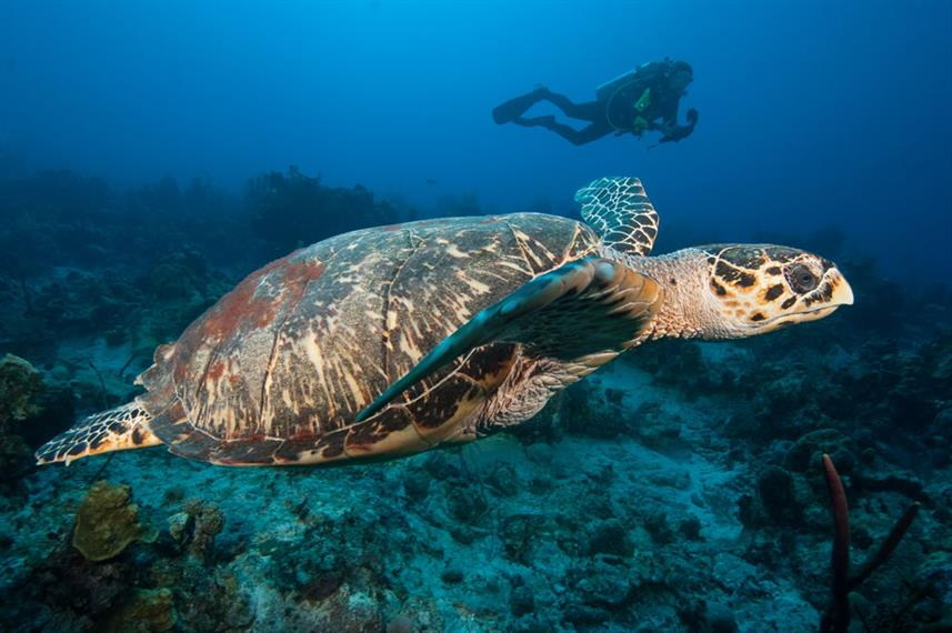 Schildpad - Turks and Caicos Explorer