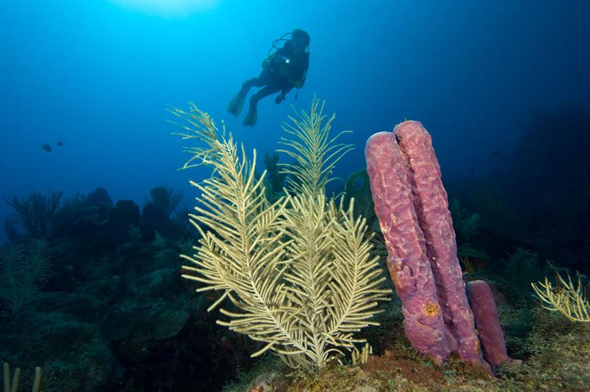 #diving - Caribbean Explorer II