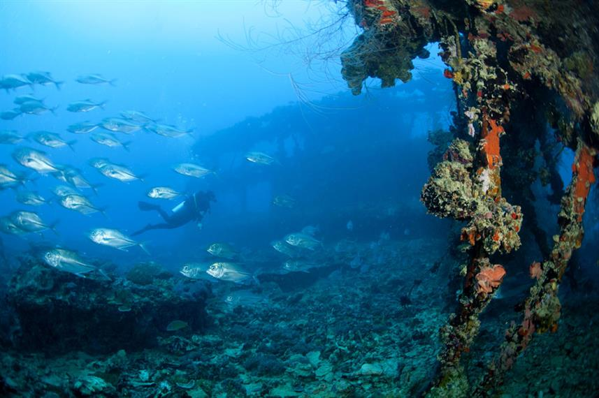 #diving - Palau Siren