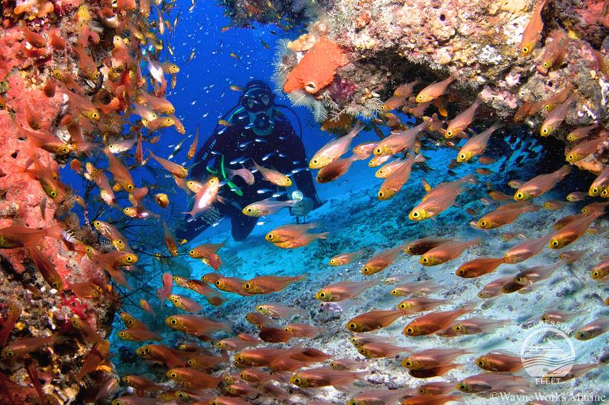 #diving - Raja Ampat Aggressor Liveaboard