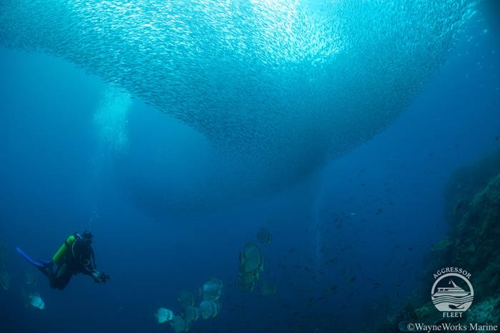 #diving - Raja Ampat Aggressor