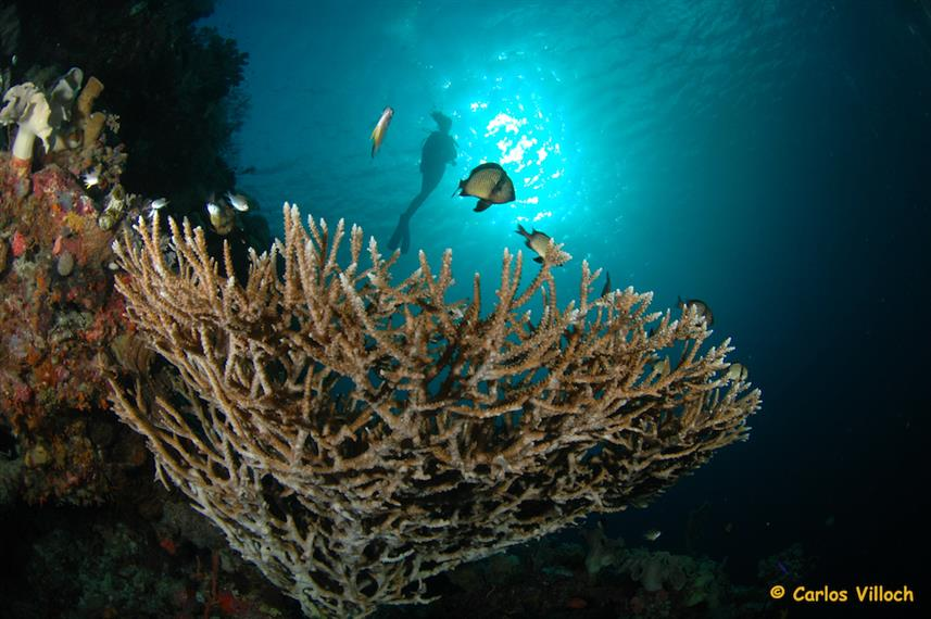 Healthy reefs in Raja Ampat