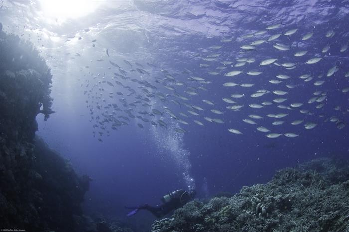 Schooling fish on the Great Barrier Reef