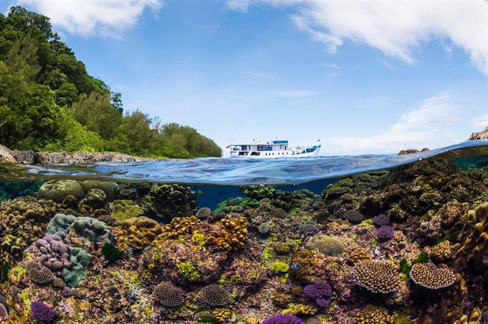 Stunning Corals in the Solomon Islands