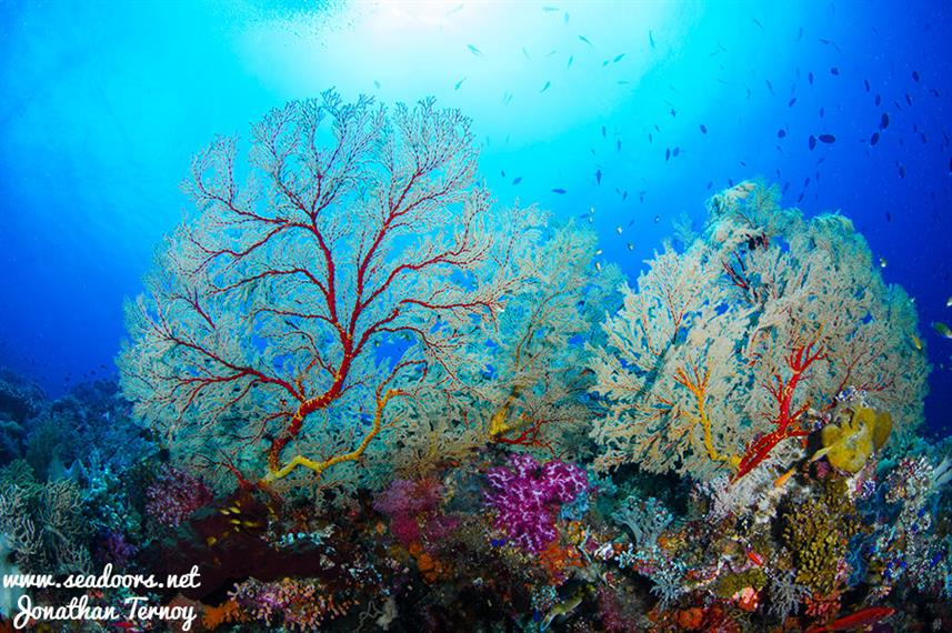 Beautiful corals - Seadoors Liveaboard Philippines