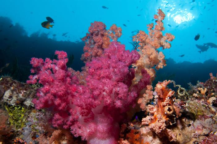 Colorful soft corals - Wakatobi, Sulawesi, Indonesia