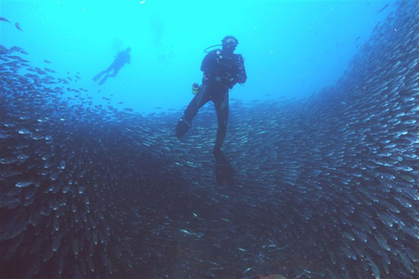 Huge schools of fish in the Galapagos