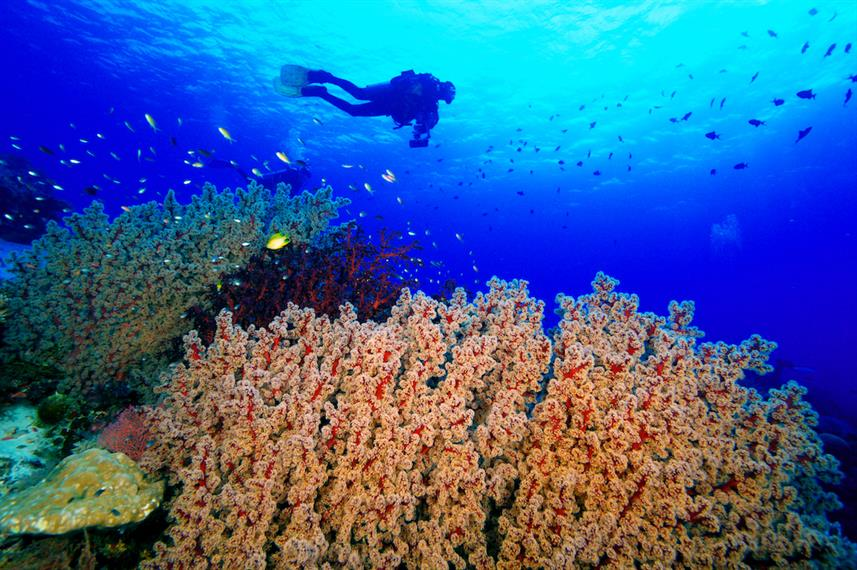 Healthy reefs of Tubbataha Philippines