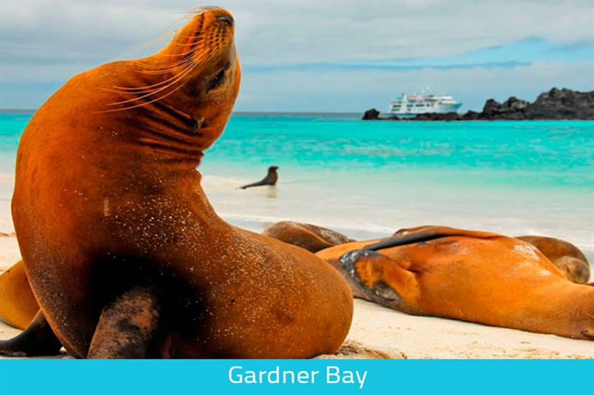 Sealions at Gardener Bay - Galapagos Expeditions