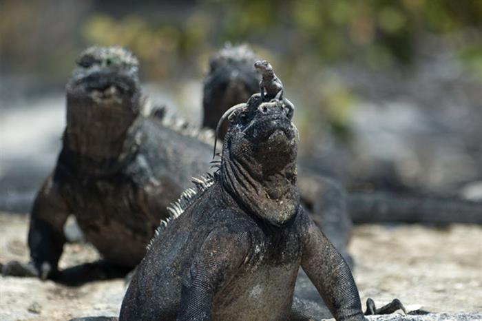 Up close and personal with nature in the Galapagos