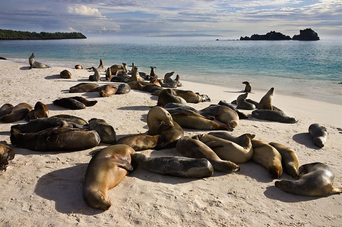 Sea lion colony Galapagos Islands