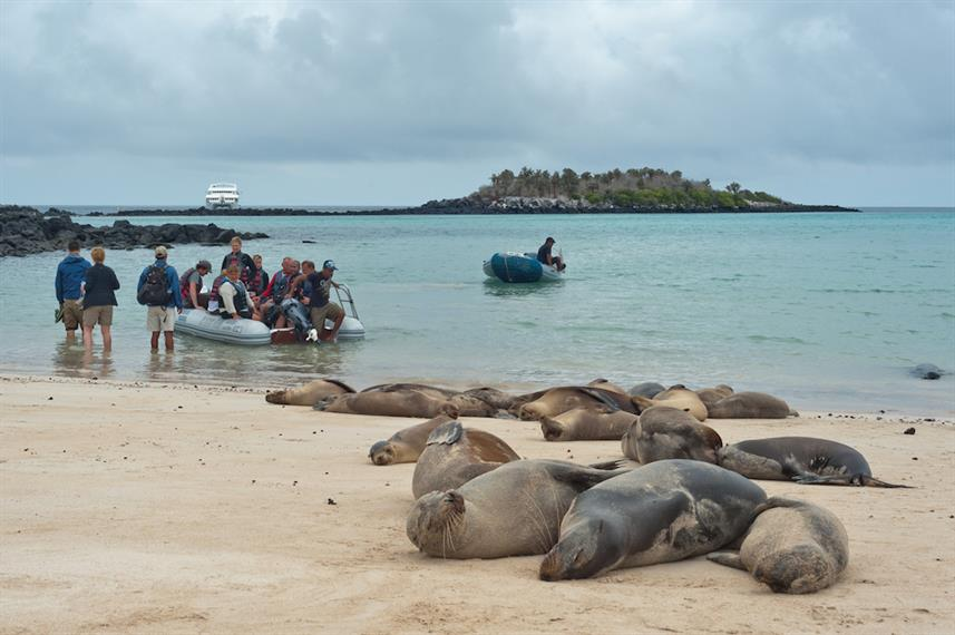 Sleepy Galapagos Sea Lions