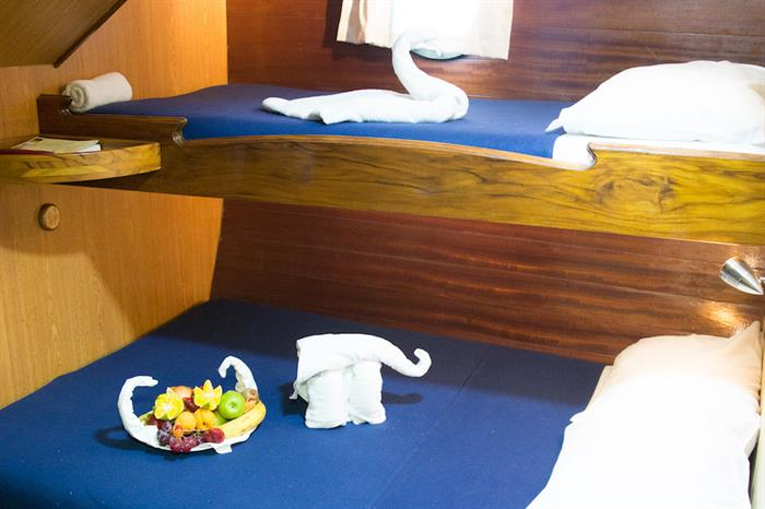 Twin Cabin - The Beagle Galapagos
