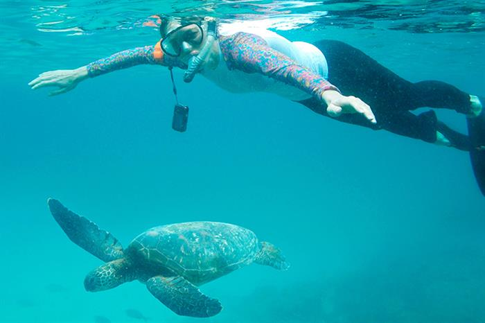 Snorkelling with Turtles in the Galapagos