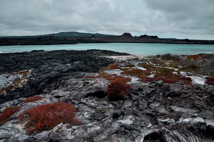 Ocean Red Shrubs - Galapagos Islands