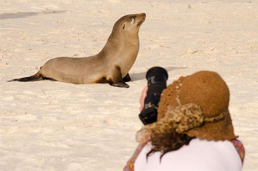 Sea Lion Posing For Photos - Galapagos Islands