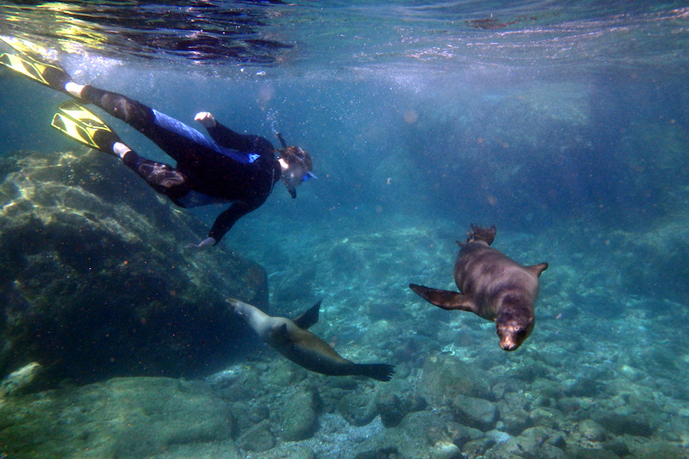 Diver swimming with sea lion