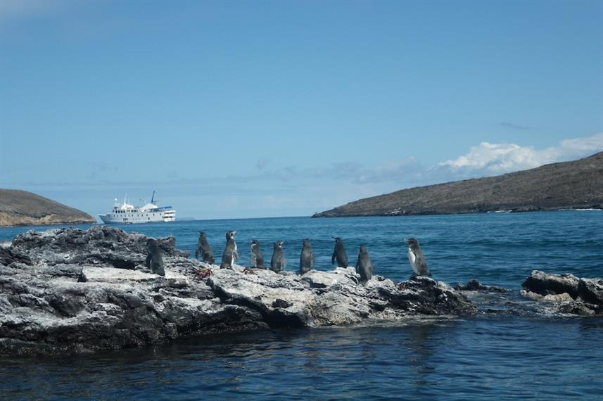 Spot the amazing local wildlife - La Pinta, Galapagos