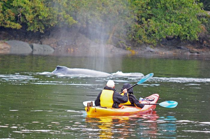 Kayaking with Humpback Whales in Alaska