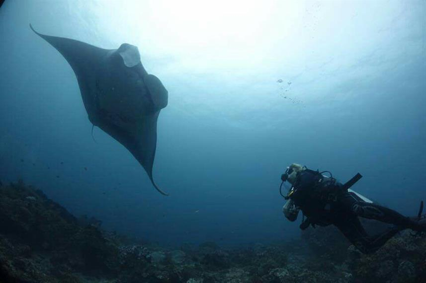 Diving - Jaya Liveaboard Indonesia