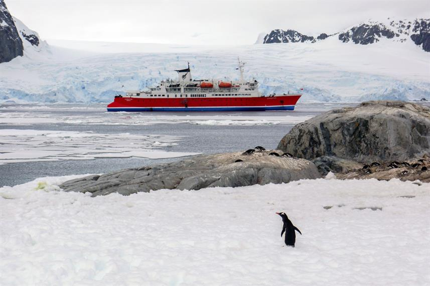 Penguin in Petermann Island - MS Expedition