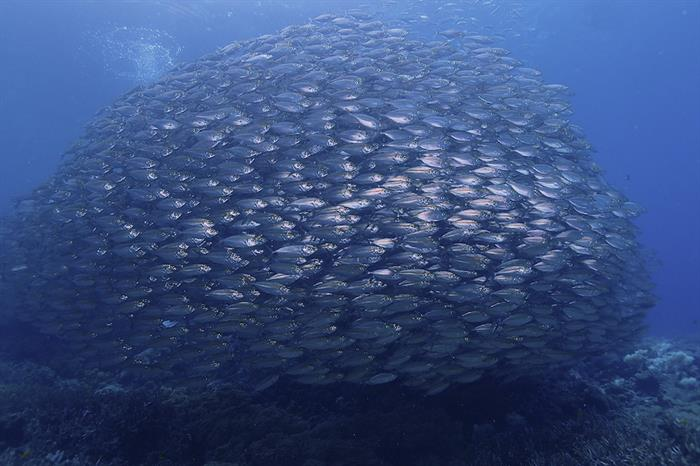 Diving with huge schools of fish life