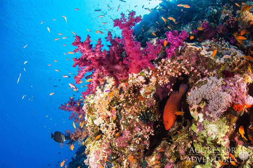 Coral Reef - Red Sea Aggressor II