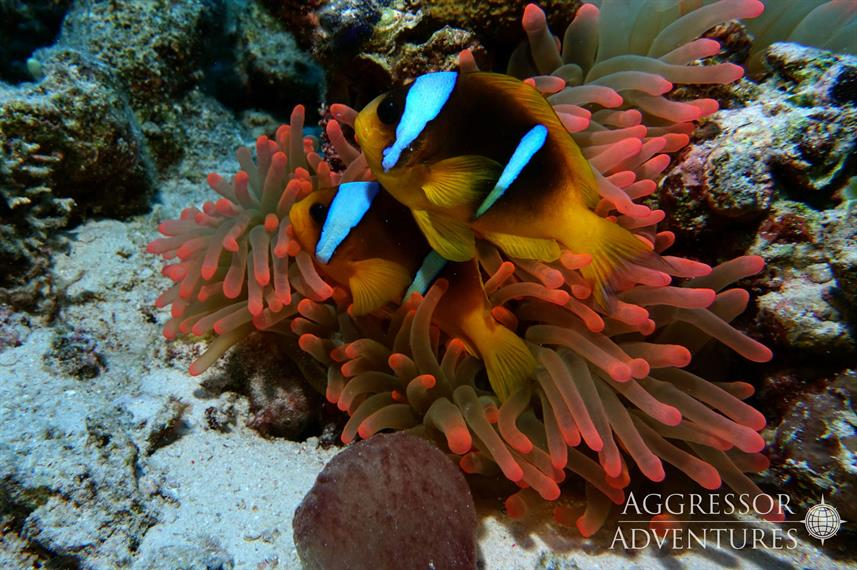 Marine Life - Red Sea Aggressor II