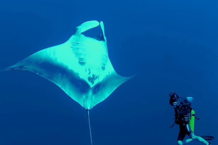 Manta - Red Sea Liveaboard