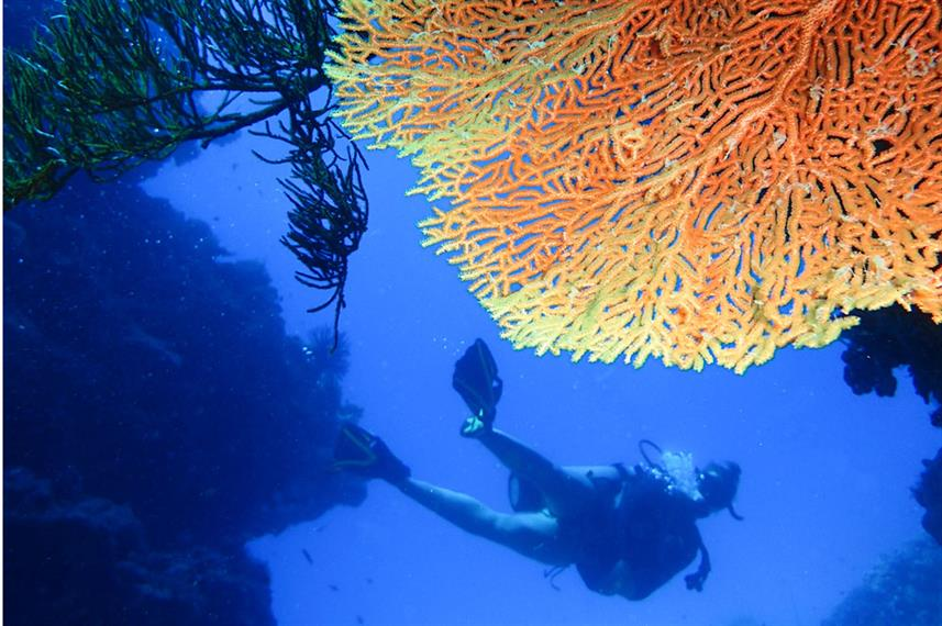 Diving the walls in the Great Barrier Reef