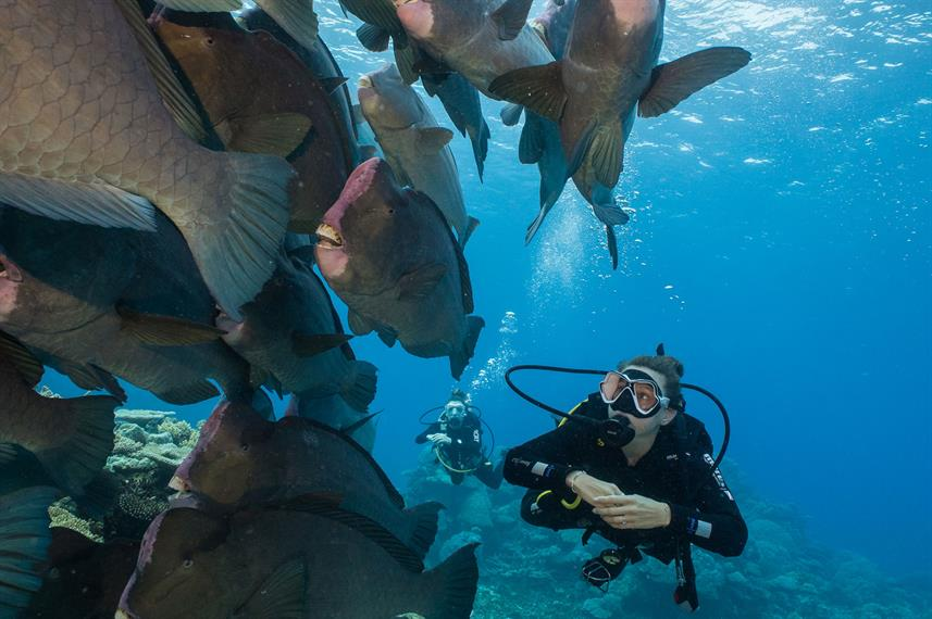 #diving - Coral Sea Dreaming