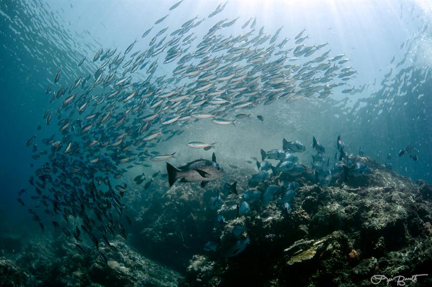 Schooling fish in Komodo