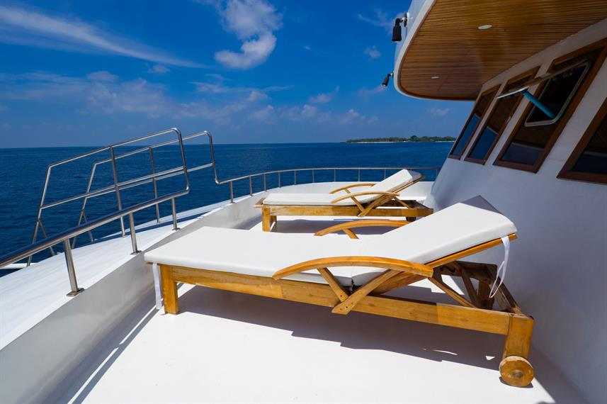Sun Deck - Blue Shark One