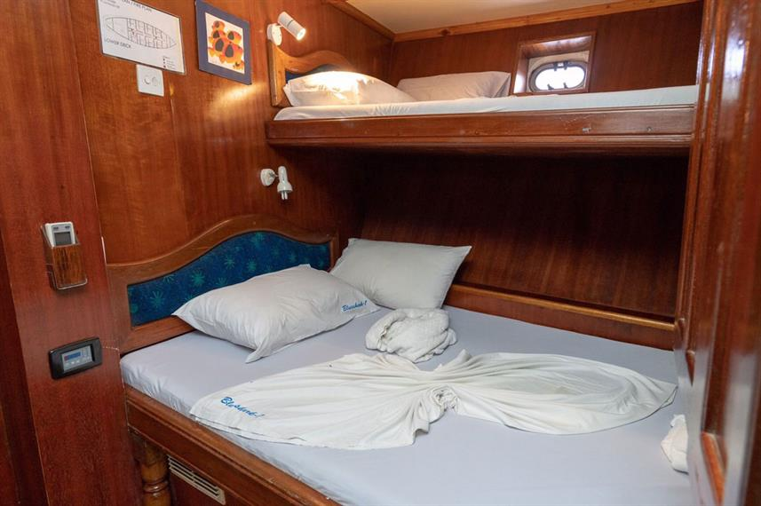 Standard Cabin - Blue Shark One