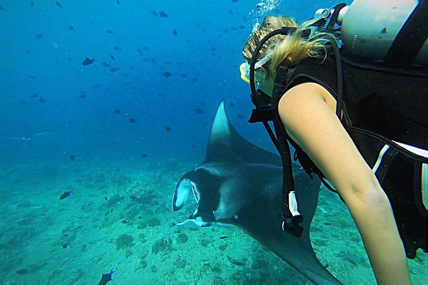 Diving with Manta