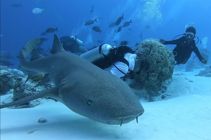 Diving with the sharks